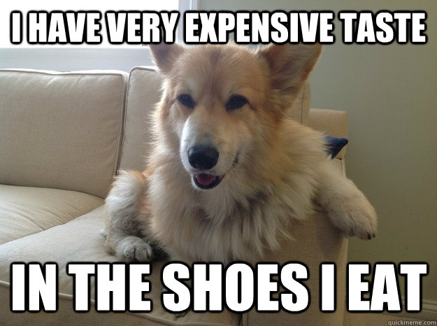 expensive taste with dog